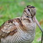 Etre ornithologue aujourd'hui